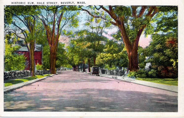 Postcard Elms_Beverly Library