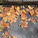 A New Tool to Quantify Nutrient and Solids Removal by Street Sweeping