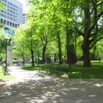 Is i-Tree Underestimating Eco-Benefits of Urban Trees?