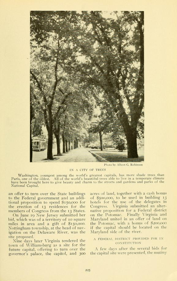 1915_NG_In a City of Trees
