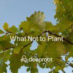 What Not To Plant