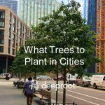 What Trees to Plant in Cities