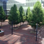 3 Ways to Sustain Nature in the Built Environment