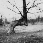 The History of Marker Trees