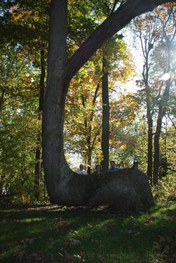 685px-Trail_Marker_Tree_in_White_County,_IN_known_as_'Grandfather'