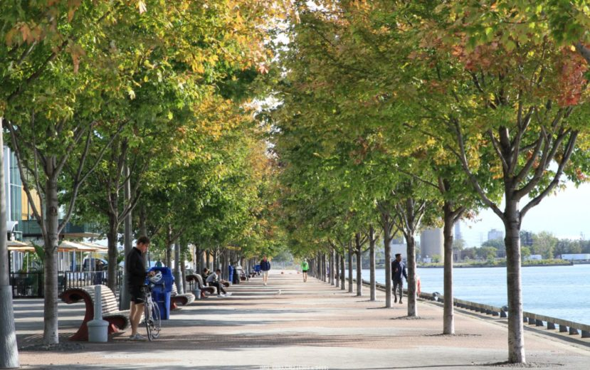 3 Ways The Urban Forest Impacts Your City | DeepRoot Blog