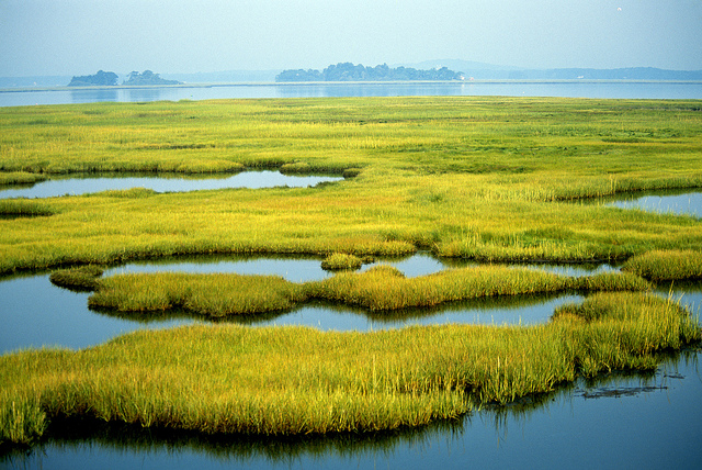 Wetlands and the earth's biomes