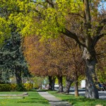 What Kind of Arborist Do You Need?