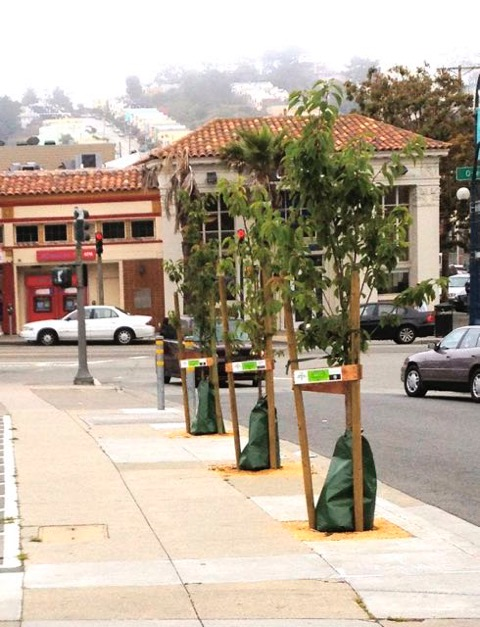 San Francisco is a town of renters. What does that mean for the city's street trees?