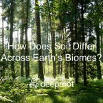 How Does Soil Differ Across Earth's Biomes?