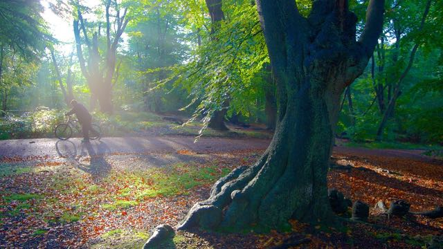 Epping Forest photo courtesy of http://images.trvl-media.com/