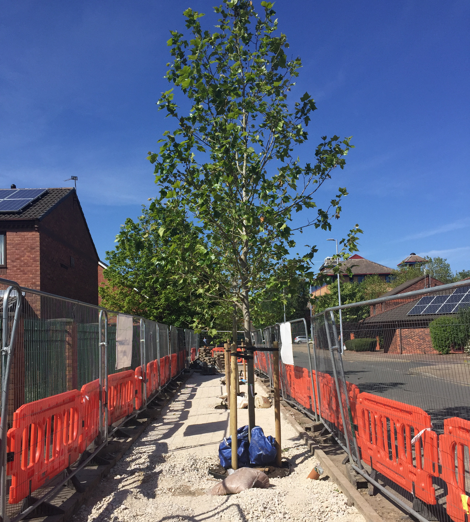 Tree on a sunny day