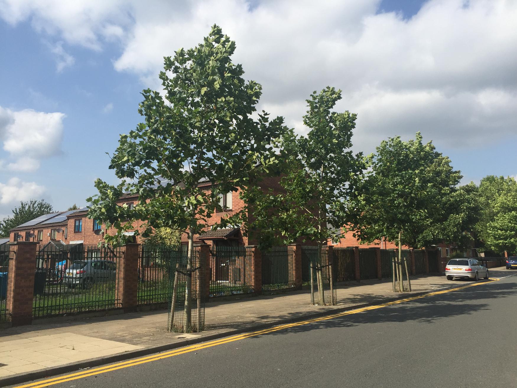 Howard Street trees in 2016