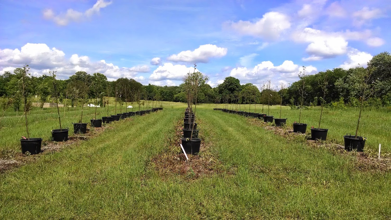 Landscape architecture can dirt become soil again for Soil 60 years