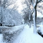 Cold Climate Benefits from Trees