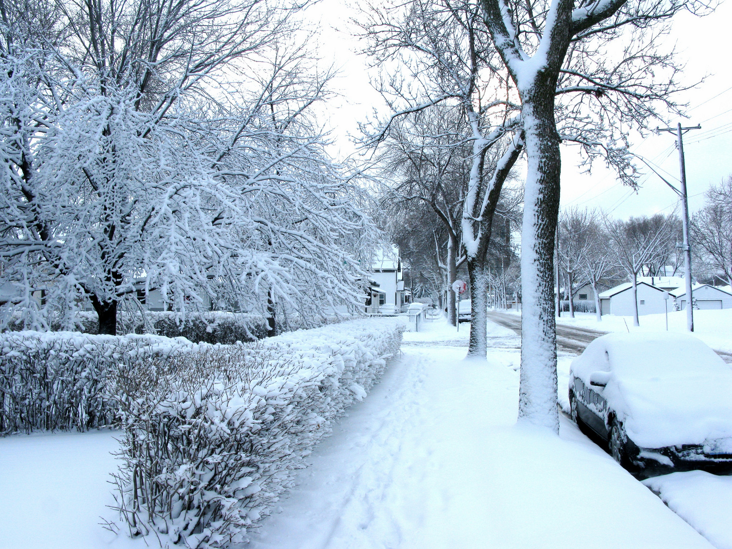 Trees provide energy savings even in winter