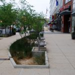 Research Shows Trees in Bioswales Provide Significant Stormwater Benefits