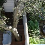 Key Concepts for Tree-Friendly Design