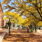 Tree-Friendly Development: The Role of a Consulting Arborist