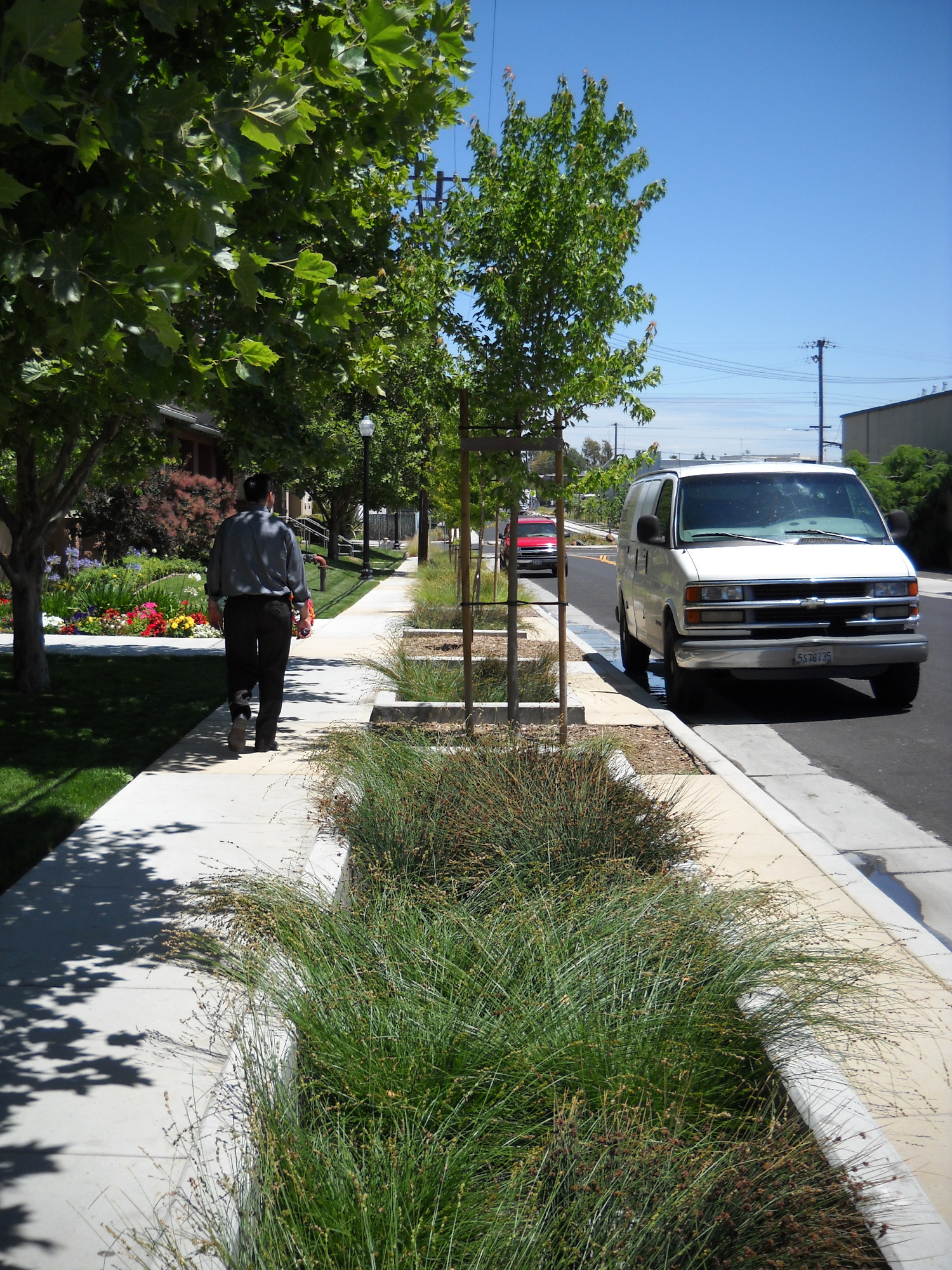 Poor Drainage Compaction Or Other Detrimental Surface Conditions Can Be Common In Urban Soils Particularly Arid Climates