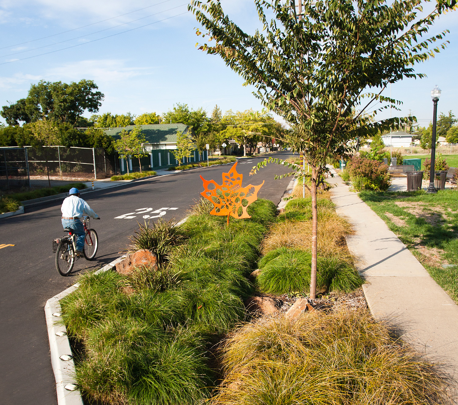 Planning For Successful Street Trees In Arid Climates