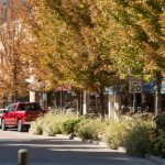Running to Stand Still: Predicting benefits for replacement tree plantings