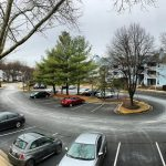How Road Salt and Stormwater Affects Tree Health