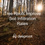 Tree Roots Improve Soil Infiltration Rates