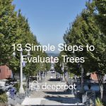 13 Simple Steps to Evaluate Trees