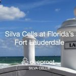 DeepRoot's Silva Cell bring Palms and Live Oak trees to Florida's Fort Lauderdale: A Case Study