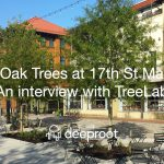 The Oaks Trees at 17th St Market: An interview with TreeLab