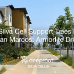 Silva Cell Support Trees in San Marcos: Armorlite Drive Case Study
