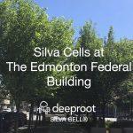Edmonton Federal Building: The Centennial Plaza Chooses Silva Cell