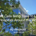 Silva Cells Bring Trees to Life at Hospitals Around the World