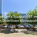 Silva Cell's Support 167 trees in Downtown Minneapolis: A Case Study