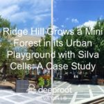 Ridge Hill Grows a Mini Forest in its Urban Playground with Silva Cells: A Case Study