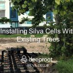 Silva Cells Can Be Installed with (around) Existing Trees – Part II