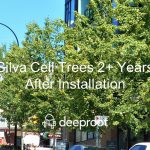 Silva Cell Trees Years of Growth