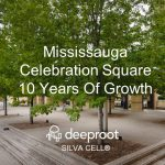 Mississauga Celebration Square 10 Years Later: Silva Cell Case Study