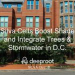 17 Trees Provide Shade and Stormwater Management in D.C. Capitol Hill Neighborhood: A Silva Cell Case Study