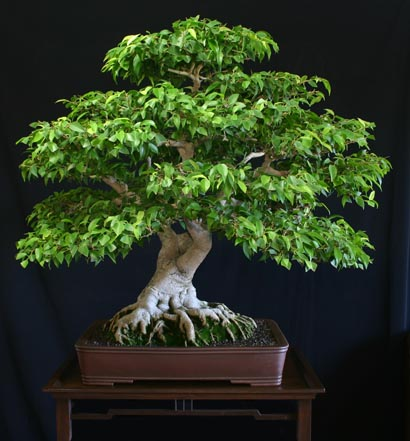 How To Grow Small Trees Deeproot Blog