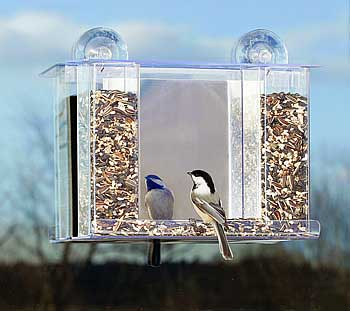 Advice about getting birds to come to my window mounted bird feeder